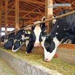 résine époxy alimentaire TOP 1 image 2 produit
